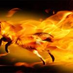 """Firefox 3.5, el """"zorro de fuego"""" más veloz"""